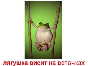 лягушка висит на веточках