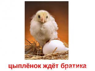 цыплёнок ждёт братика