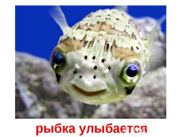 рыбка улыбается