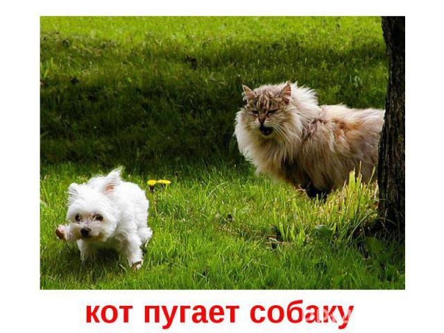 кот пугает собаку