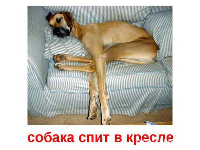 собака спит в кресле