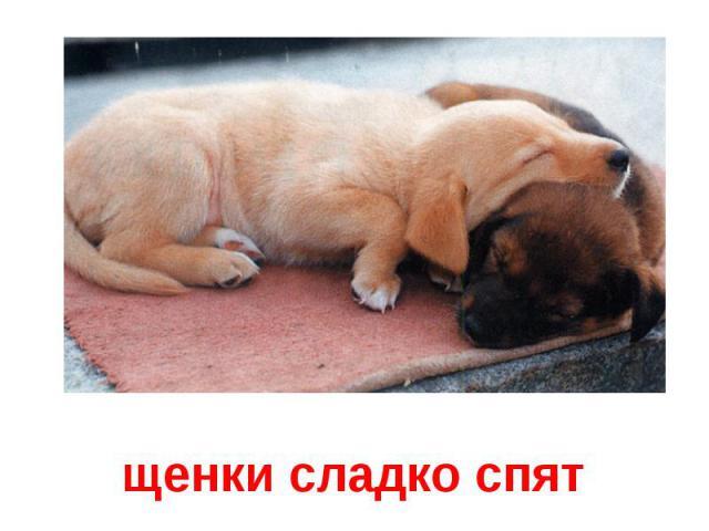 щенки сладко спят