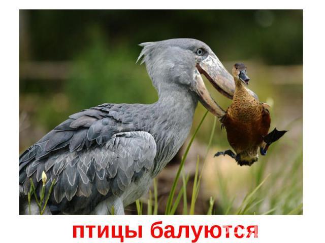 птицы балуются