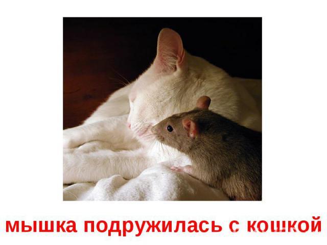 мышка подружилась с кошкой