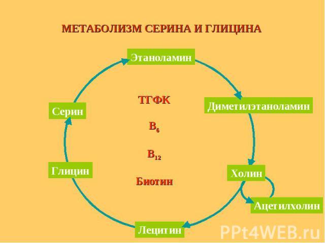ТГФК В6 В12 Биотин МЕТАБОЛИЗМ СЕРИНА И ГЛИЦИНА Этаноламин Серин Глицин Лецитин Диметилэтаноламин Ацетилхолин Холин