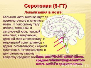 Дневное отделение фармацевтического факультета Серотонин (5-ГТ) Локализация в мо