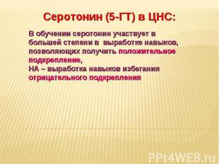 Дневное отделение фармацевтического факультета Серотонин (5-ГТ) в ЦНС: В обучени
