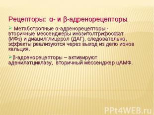 Дневное отделение фармацевтического факультета Рецепторы: α- и β-адренорецепторы