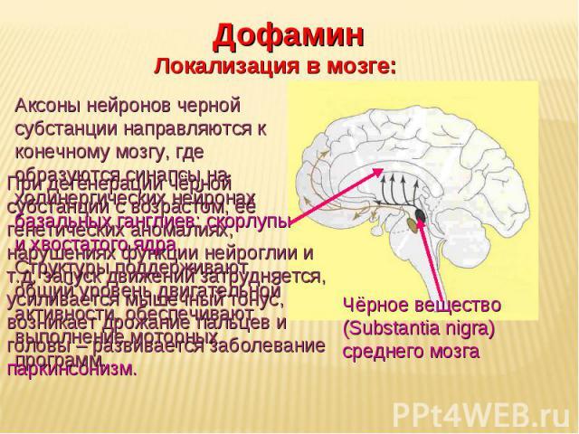 Дневное отделение фармацевтического факультета Чёрное вещество (Substantia nigra) среднего мозга Дофамин Локализация в мозге: При дегенерации чёрной субстанции с возрастом, её генетических аномалиях, нарушениях функции нейроглии и т.д. запуск движен…