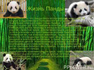 Жизнь Панды Несмотря на то, что панды относятся к хищным животным, их рацион в п