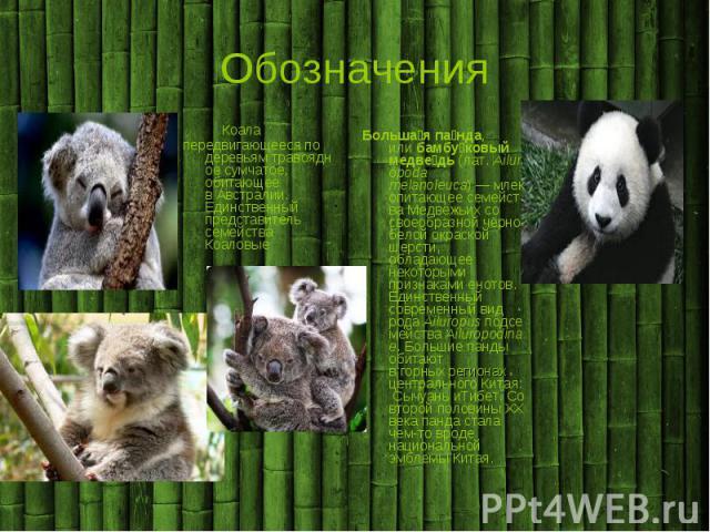 Обозначения Коала передвигающееся по деревьям травоядное сумчатое, обитающее в Австралии. Единственный представитель семейства Коаловые Большая панда, или бамбуковый медведь (лат. Ailuropoda melanoleuca) — млекопитающее семейства Медвежьих со своеоб…