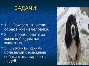 ЗАДАЧИ: 1. Показать значение собак в жизни человека. 2. Пронаблюдать за жизнью б