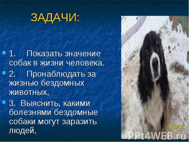 ЗАДАЧИ: 1. Показать значение собак в жизни человека. 2. Пронаблюдать за жизнью бездомных животных, 3. Выяснить, какими болезнями бездомные собаки могут заразить людей,
