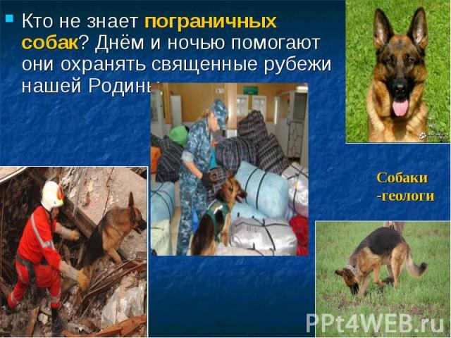 Кто не знает пограничных собак? Днём и ночью помогают они охранять священные рубежи нашей Родины. Собаки -геологи