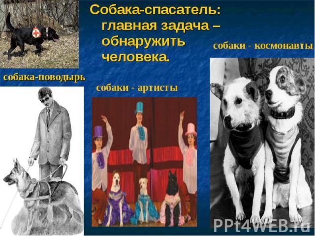 Собака-спасатель: главная задача – обнаружить человека. собака-поводырь собаки - артисты собаки - космонавты