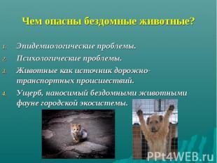 Чем опасны бездомные животные? Эпидемиологические проблемы. Психологические проб