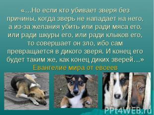 «…Но если кто убивает зверя без причины, когда зверь не нападает на него, а из-з