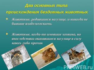 Два основных типа происхождения бездомных животных Животные, родившиеся на улице