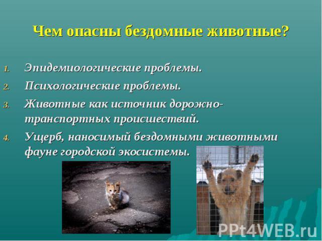Чем опасны бездомные животные? Эпидемиологические проблемы. Психологические проблемы. Животные как источник дорожно-транспортных происшествий. Ущерб, наносимый бездомными животными фауне городской экосистемы.