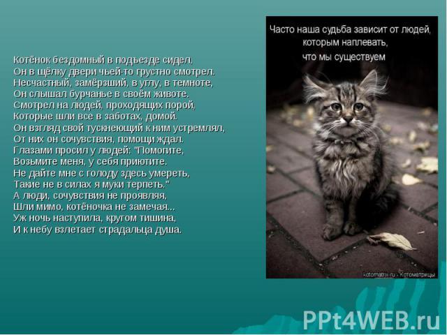 Котёнок бездомный в подъезде сидел, Он в щёлку двери чьей-то грустно смотрел. Несчастный, замёрзший, в углу, в темноте, Он слышал бурчанье в своём животе. Смотрел на людей, проходящих порой, Которые шли все в заботах, домой. Он взгляд свой тускнеющи…