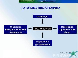 ПАТОГЕНЕЗ ПИЕЛОНЕФРИТА ПИЕЛОНЕФРИТ Нарушение уродинамики Инфекция Изменение горм