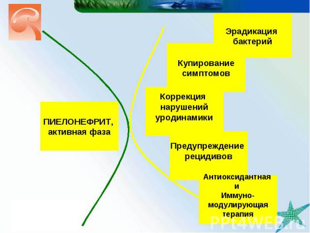 Купирование симптомов Эрадикация бактерий Предупреждение рецидивов ПИЕЛОНЕФРИТ, активная фаза Коррекция нарушений уродинамики Антиоксидантная и Иммуно- модулирующая терапия