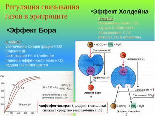 Эффект Бора в тканях: увеличение концентрации СО2 падение рН связывание Н+ с гло