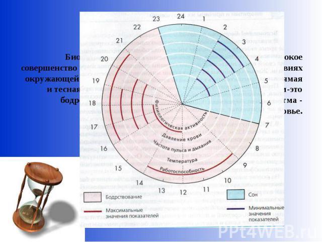 Биоритмы - «внутренние часы»,обеспечивающие высокое совершенство и гармонию жизни в постоянно меняющихся условиях окружающей среды. Между ритмом жизни и здоровьем есть прямая и тесная связь, которую можно сформулировать так: ритм-это бодрость и высо…