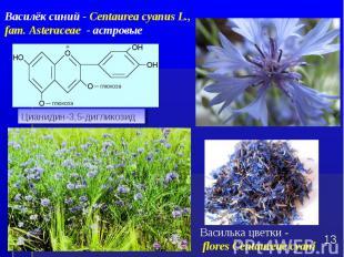 Василька цветки - flores Centaureae cyani * Цианидин-3,5-дигликозид Василёк сини