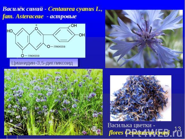 Василька цветки - flores Centaureae cyani * Цианидин-3,5-дигликозид Василёк синий - Centaurea cyanus L., fam. Asteraceae - астровые