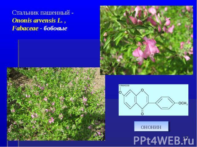 * Стальник пашенный - Ononis arvensis L. , Fabaceae - бобовые ононин