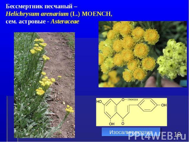 * Бессмертник песчаный – Helichrysum arenarium (L.) MOENCH, сем. астровые - Asteraceae Изосалипурпозид