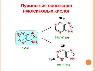 Пуриновые основания нуклеиновых кислот
