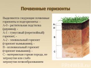 Выделяются следующие почвенные горизонты и подгоризонты: - A-0 - растительная по