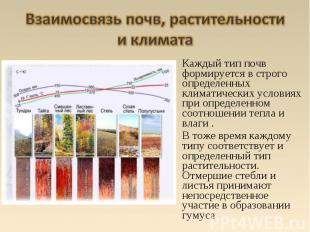 Каждый тип почв формируется в строго определенных климатических условиях при опр