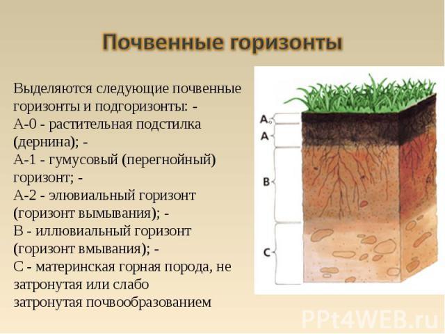 Выделяются следующие почвенные горизонты и подгоризонты: - A-0 - растительная подстилка (дернина); - A-1 - гумусовый (перегнойный) горизонт; - A-2 - элювиальный горизонт (горизонт вымывания); - B - иллювиальный горизонт (горизонт вмывания); - С - ма…