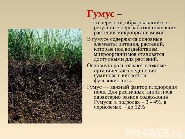 Гумус – это перегной, образовавшийся в результате переработки отмерших растений микроорганизмами. В гумусе содержатся основные элементы питания, растений, которые под воздействием, микроорганизмов становятся доступными для растений. Основную роль иг…