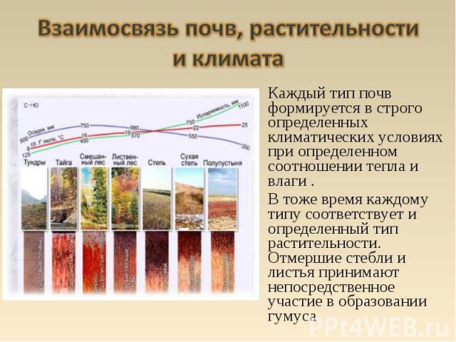 Каждый тип почв формируется в строго определенных климатических условиях при определенном соотношении тепла и влаги . В тоже время каждому типу соответствует и определенный тип растительности. Отмершие стебли и листья принимают непосредственное учас…