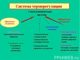 Афферентные механизмы Гипоталямическая система Эфферентные механизмы Центральные