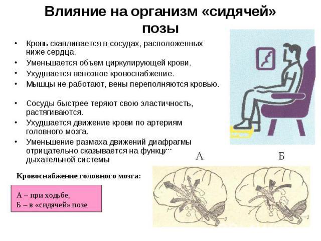 Влияние на организм «сидячей» позы Кровь скапливается в сосудах, расположенных ниже сердца. Уменьшается объем циркулирующей крови. Ухудшается венозное кровоснабжение. Мышцы не работают, вены переполняются кровью. Сосуды быстрее теряют свою эластично…