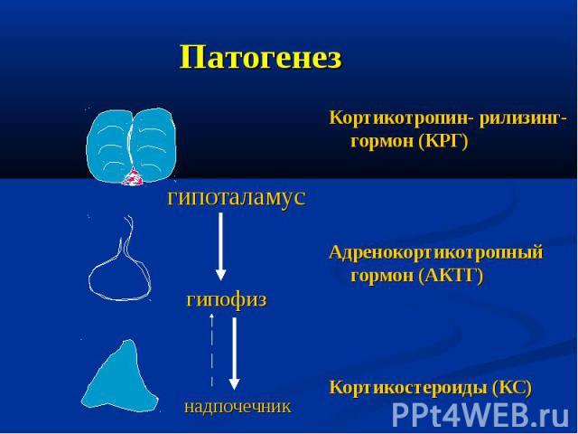 Патогенез Кортикотропин- рилизинг-гормон (КРГ) Адренокортикотропный гормон (АКТГ) Кортикостероиды (КС) гипоталамус гипофиз надпочечник