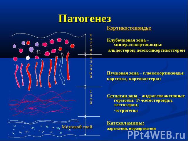 Патогенез Кортикостеноиды: Клубочковая зона – минералокортикоиды: альдостерон, дезоксикортикостерон Пучковая зона – глюкокортикоиды: кортизол, кортикостерон Сетчатая зона – андрогеноактивные гормоны: 17-кетостероиды, тестотерон; -эстрогены Катехолам…