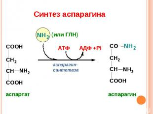 Синтез аспарагина