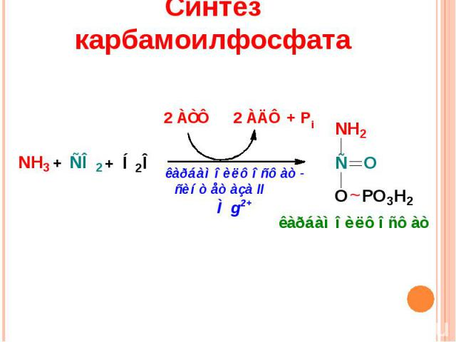Синтез карбамоилфосфата