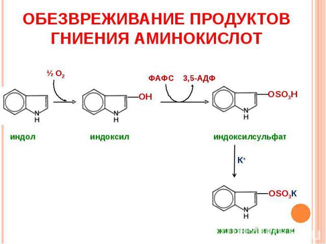 ОБЕЗВРЕЖИВАНИЕ ПРОДУКТОВ ГНИЕНИЯ АМИНОКИСЛОТ ОН ОSO3Н индол индоксил индоксилсульфат ОSO3К животный индикан К+ ФАФС 3,5-АДФ Ѕ О2