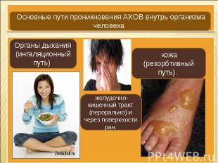 Основные пути проникновения АХОВ внутрь организма человека Органы дыхания (ингал