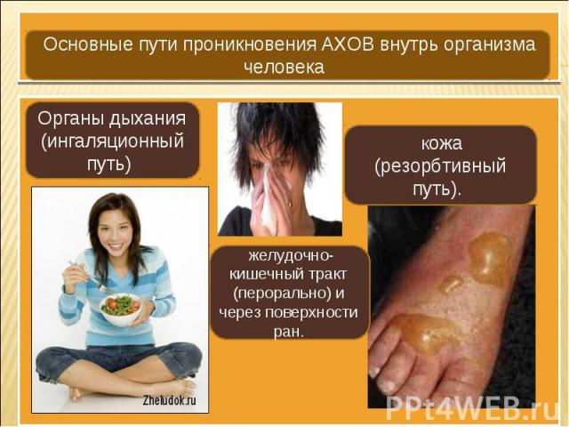 Основные пути проникновения АХОВ внутрь организма человека Органы дыхания (ингаляционный путь) Кожа (резорбтивный путь). желудочно-кишечный тракт (перорально) и через поверхности ран.