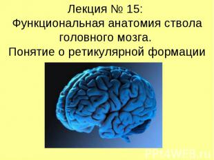 Лекция № 15: Функциональная анатомия ствола головного мозга. Понятие о ретикуляр