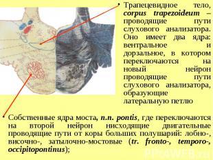 Трапецевидное тело, corpus trapezoideum – проводящие пути слухового анализатора.