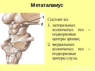 Метаталамус Состоит из: латеральных коленчатых тел – подкорковые центры зрения;